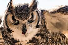 Rita Poe's love for animals, such as the great horned owl, inspired her to leave nearly $800,000 to a dozen national wildlife refuges and parks, mostly in the West.